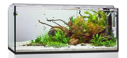 Zierfisch center elos aqua studio startseite for Zierfisch shop