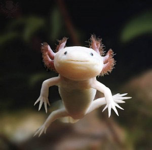 Zierfisch center mering elos aqua studio axolotl for Zierfisch teich